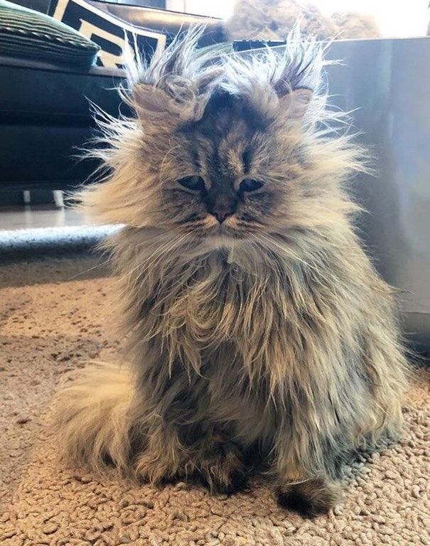 Cute Kitties Bed Head Aww Source Reddit Com Oh My Goodness This Little One Looks Like He She Just Rolled Out Of Bed An Funny Cat Pictures Cats Funny Animals