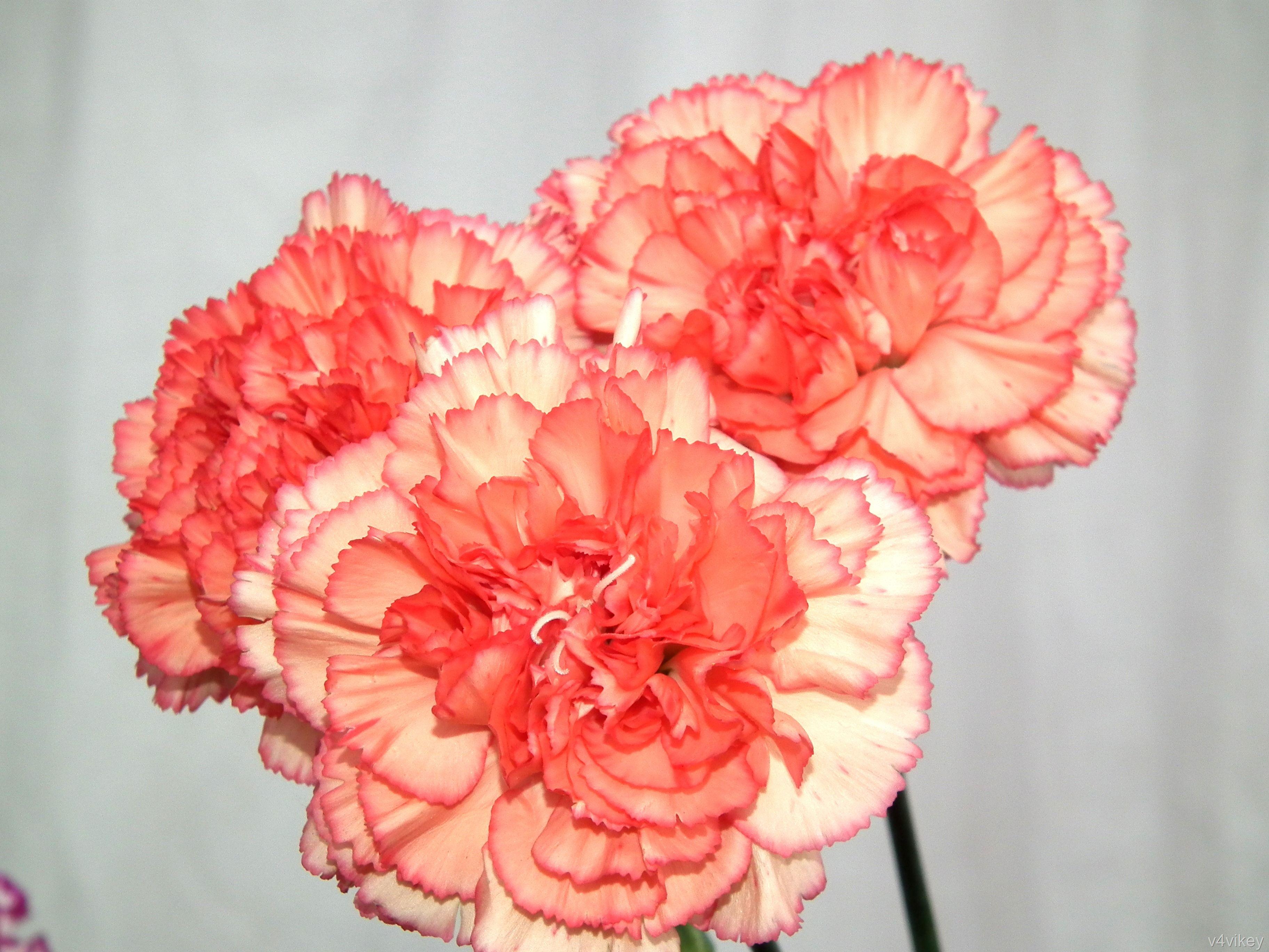 Peach Color Flowers | Wedding Gallery