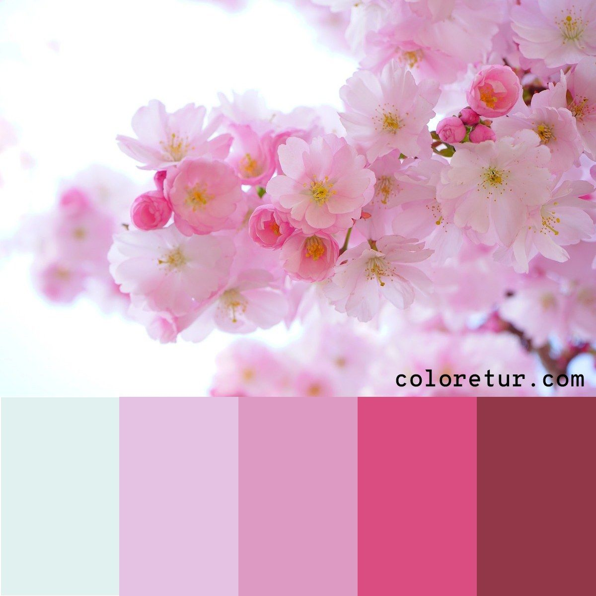 Cherry Trees Pale Pink Cherry Blossoms Make A Delicate Color Palette Download The Swatc Color Palette Pink Pink Color Palette Wedding Tree Drawings Pencil