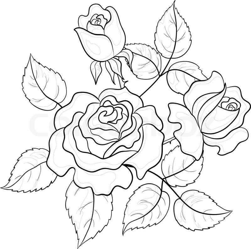 Stock vector of 'Flowers roses, vector, buds and leaves