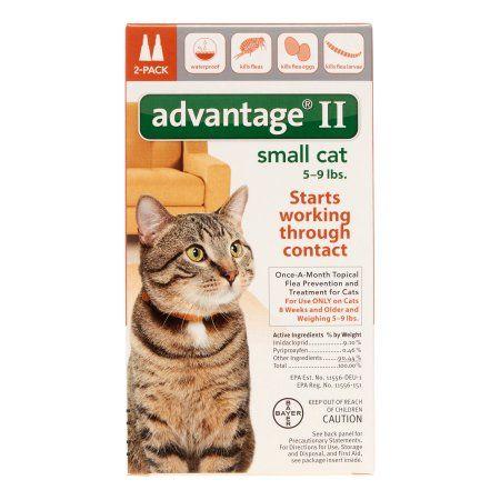 Pets Flea Control For Cats Cat Fleas Small Cat