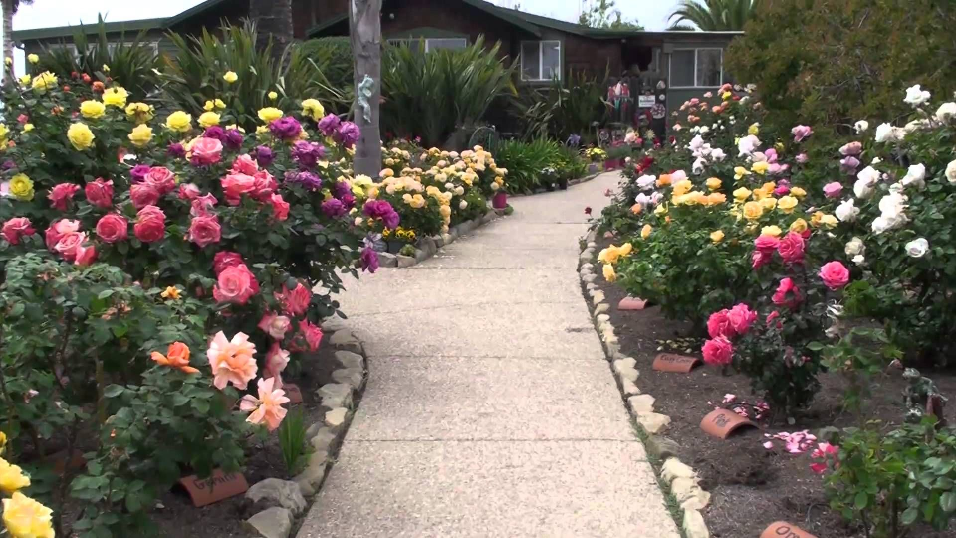 Most Beautiful Rose Gardens In The World take a tour of the beautiful rose gardens on the bragg organic
