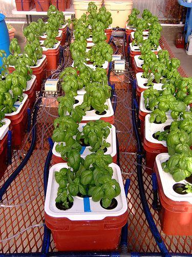 Hydroponic Gardening Grow Organic Plants Fast 400 x 300
