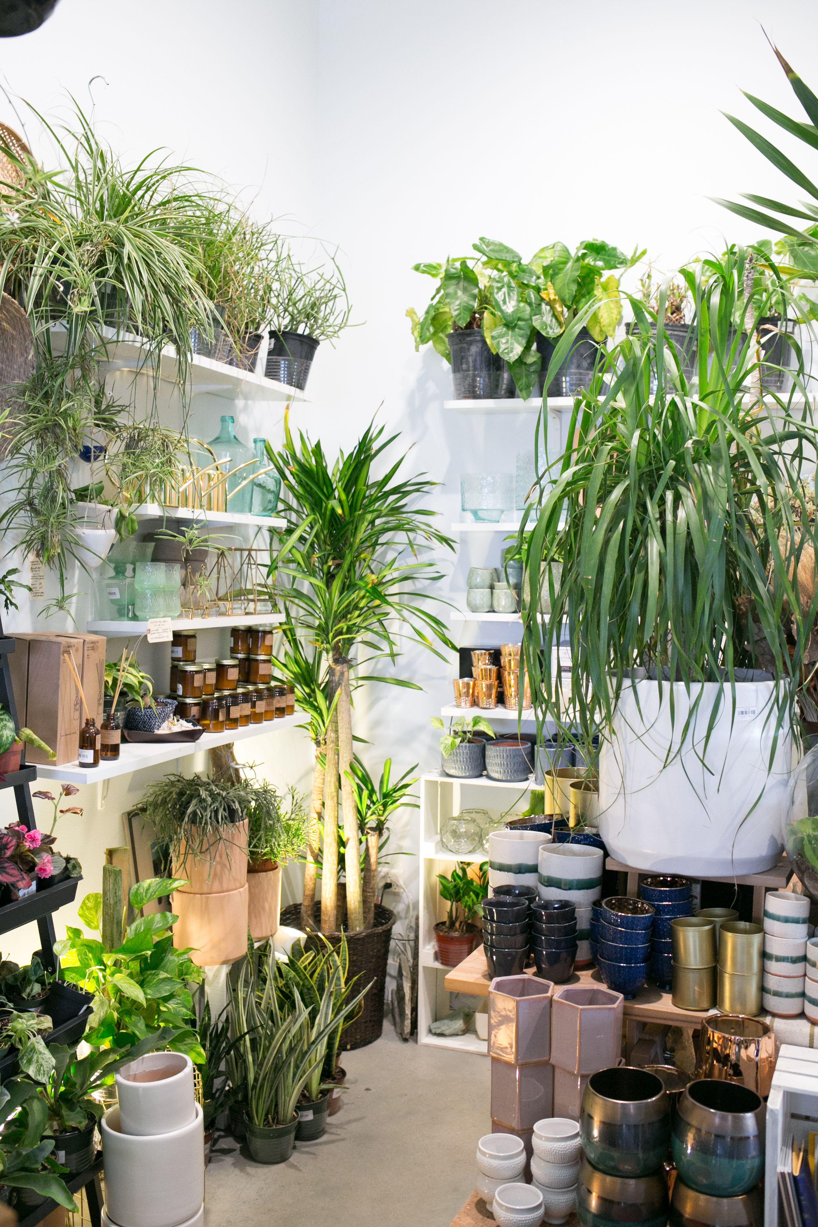 Great New Mid Mod Shop Tillandsia Display Garden Center