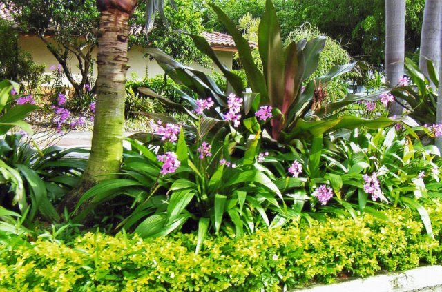 South florida landscaping ideas pictures florida for Tropical plants landscaping ideas