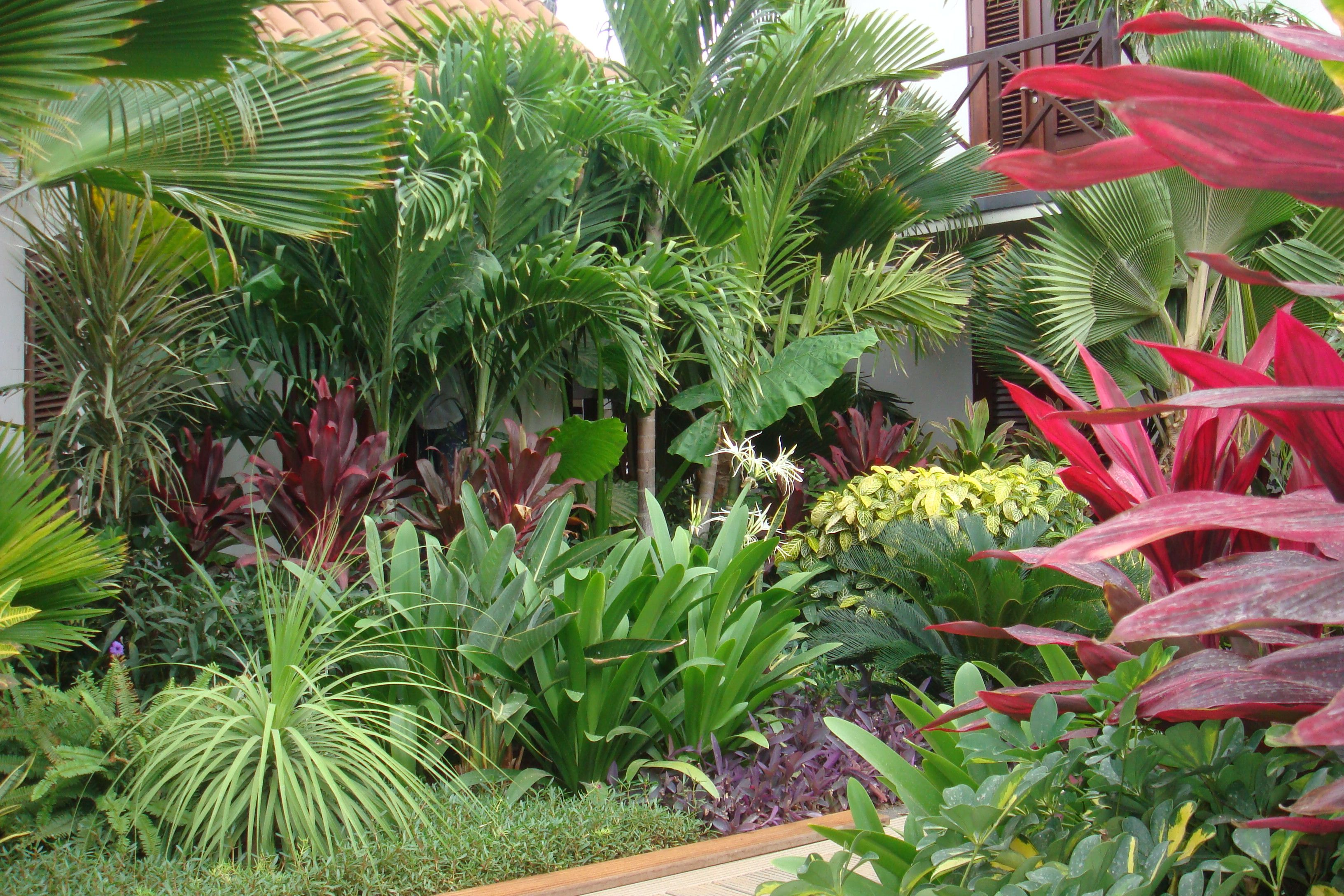 Always Dreamed Of A Lush Jungle In My Own Backyard Would Live In A Bathing Suit Sarong And F Tropical Backyard Tropical Garden Design Small Garden Landscape