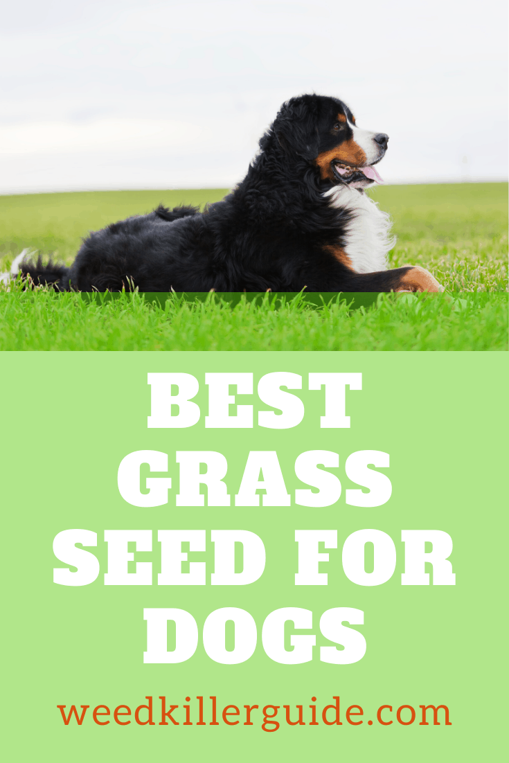 Best Grass Seed For Dogs in 2020 Our Reviews and
