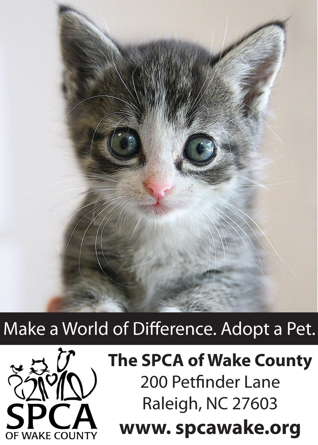 Adopt a cat at the SPCA of Wake County