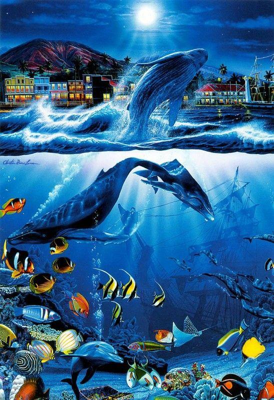 Christian Riese Lassen Art Orques Photos Animaux Aquatiques