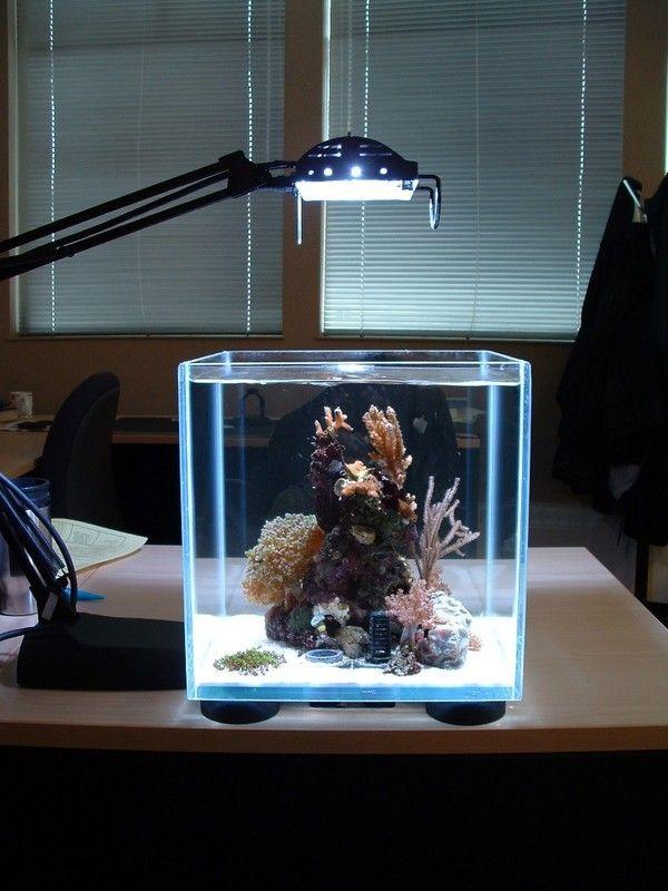 aquarium dans le salon en plus de 103 id es magnifiques aquariums reef tanks and saltwater tank. Black Bedroom Furniture Sets. Home Design Ideas