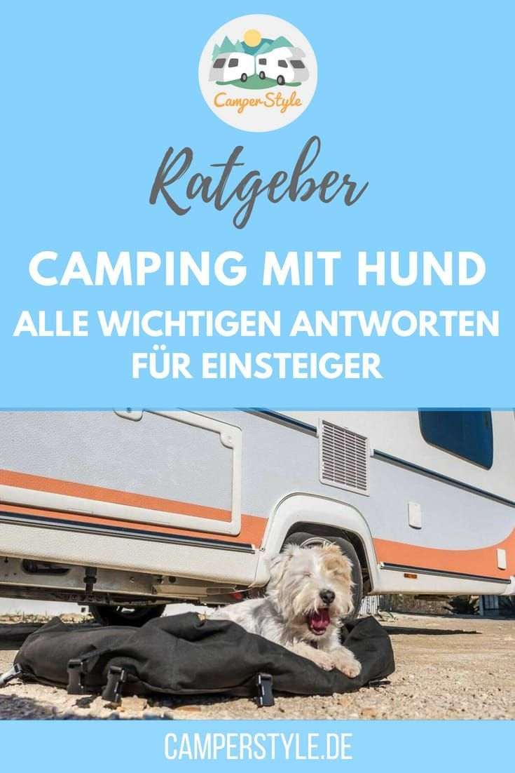 Photo of Camping with a dog for the first time: what you should consider