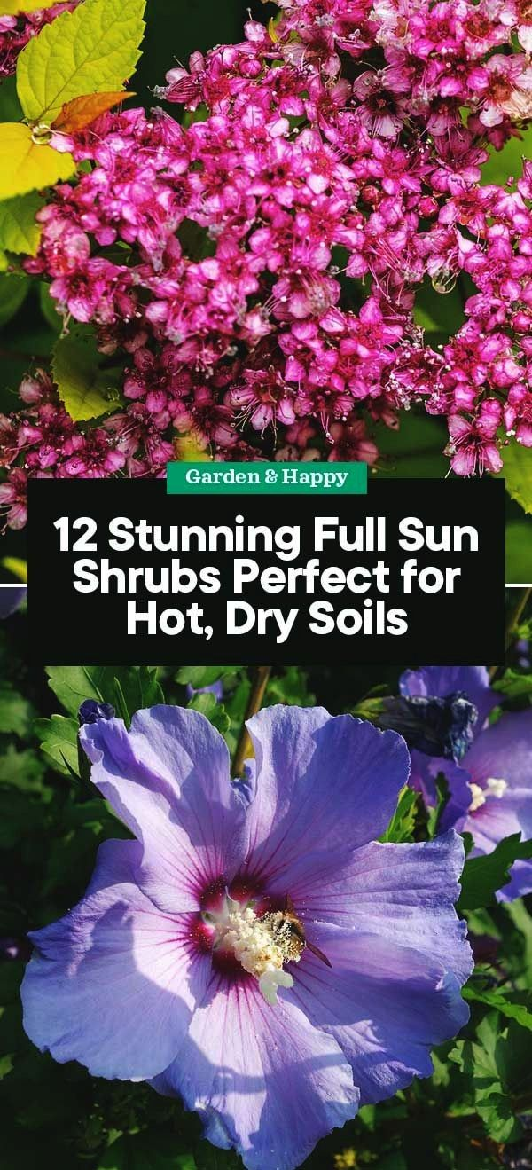 Stunning Full Sun Shrubs Perfect for Hot Dry Soils12 Stunning Full Sun Shrubs Perfect for Hot Dry Soils The Smart Security Camera will connect easily to your Home or offi...
