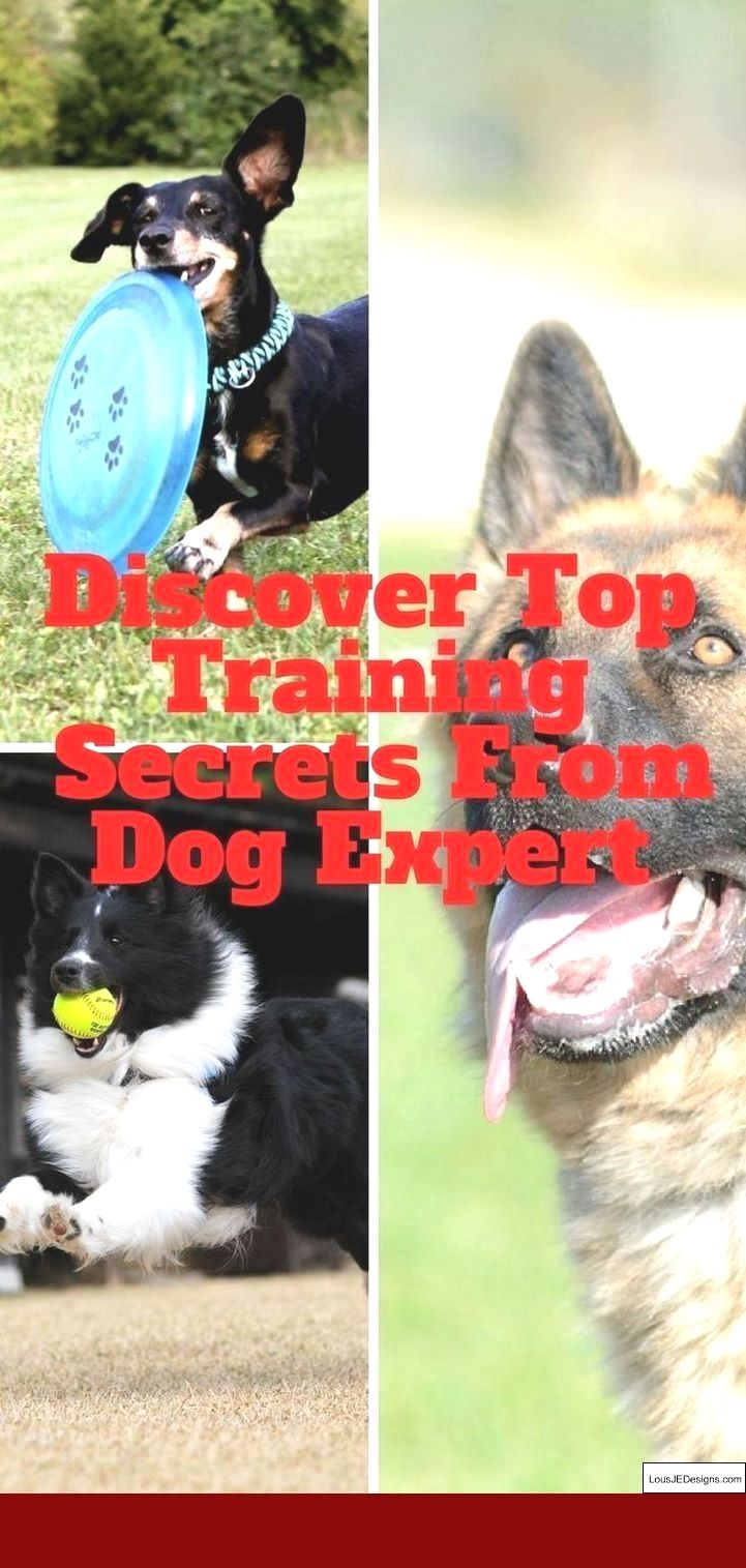 How To Train A Dog To Come With An Electronic Collar And Pics Of