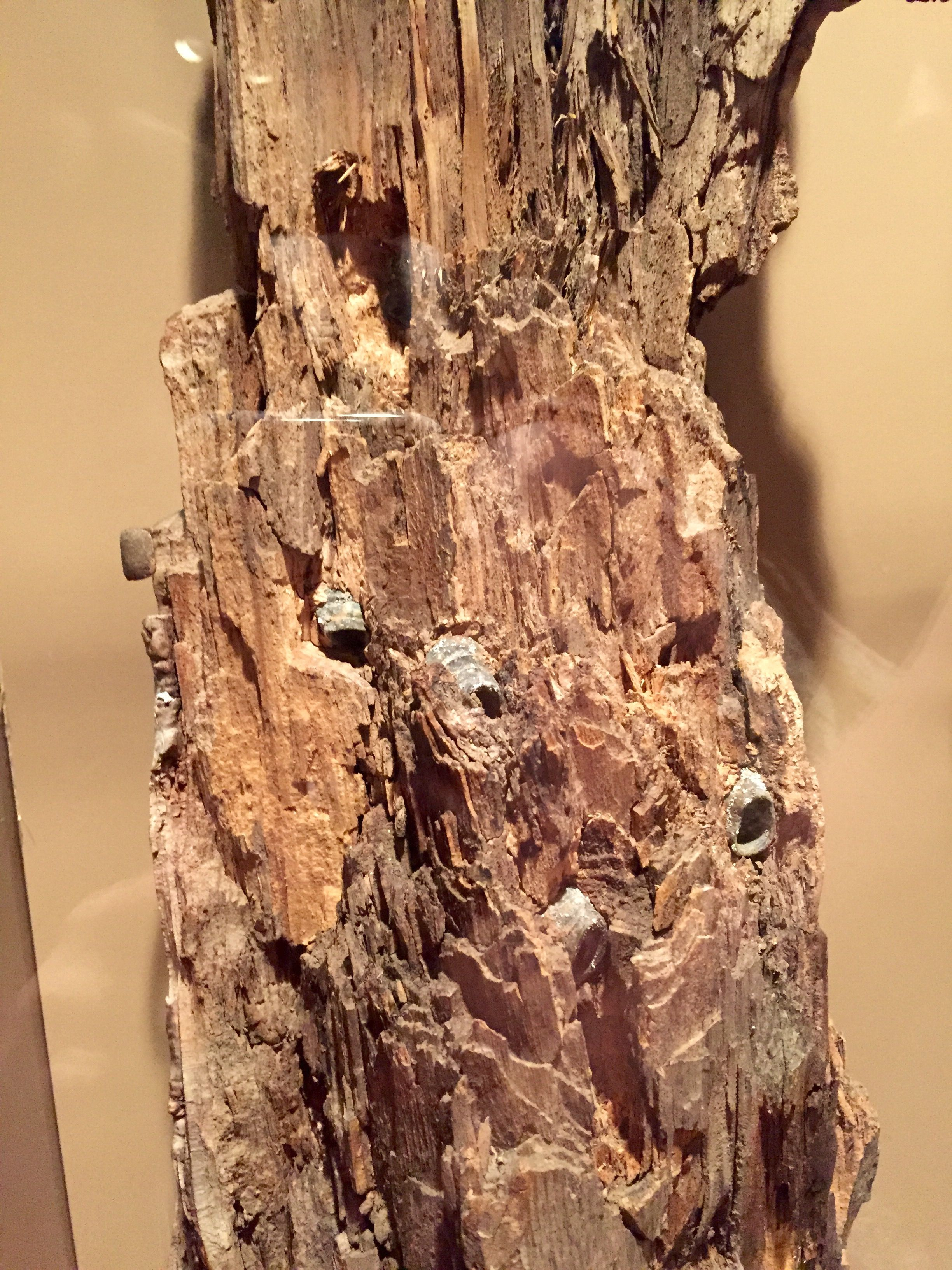 Atlanta Historic Museum Bullet Ridden Tree Stump With Civil War