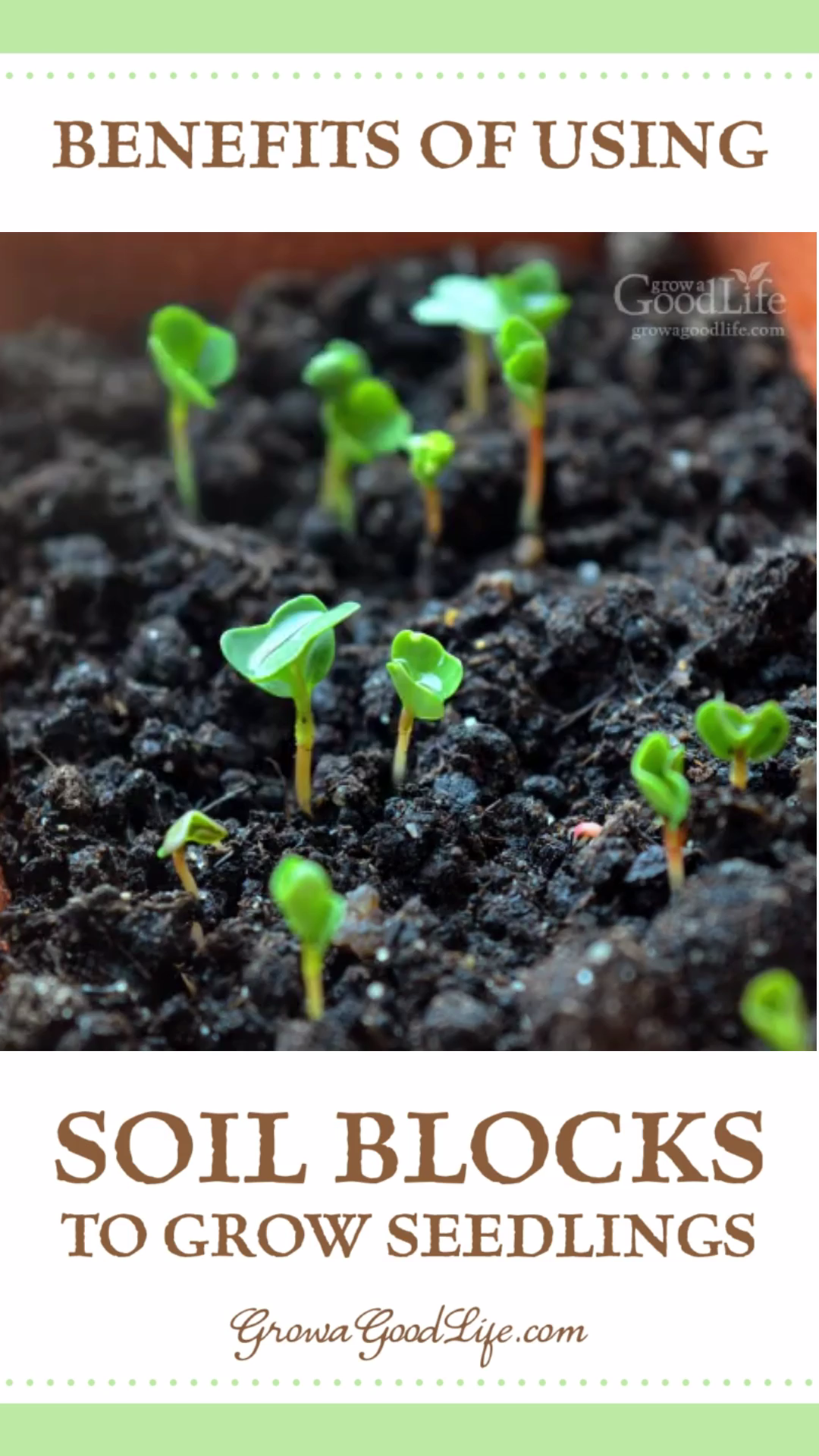 Soil Blocks to Grow Seedlings is part of Container gardening vegetables, Seedlings, Growing vegetables, Organic raised garden beds, Growing seedlings, Seedlings indoors - Seedlings grown in soil blocks are easy to transplant with no damage to the roots allowing the seedlings establish quickly into the surrounding soil