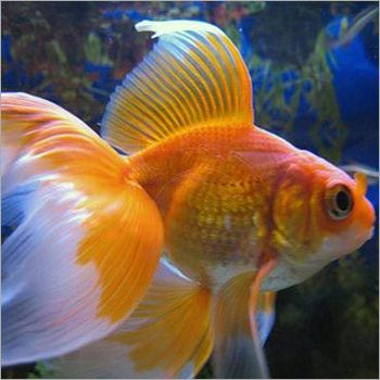 Aquarium fishes names and pictures product specification for Cute freshwater fish