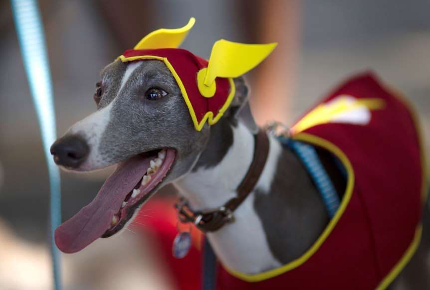 A Dog Wears The Flash Costume For A Carnival Pet Parade In Rio