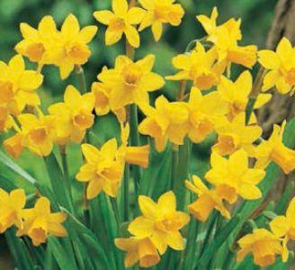 Bulbi Fiori Gialli.Bulbi Autunnali Blumen Part 3 Fiori Primaverili Coltivare I