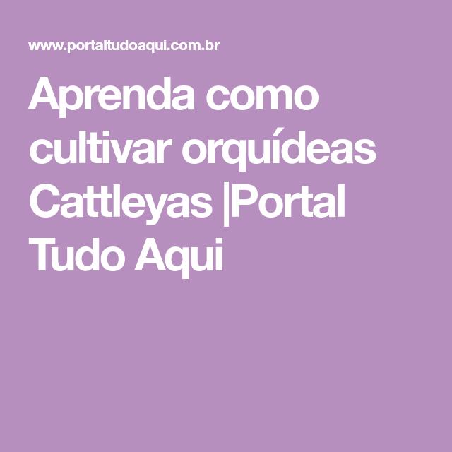 Aprenda como cultivar orquídeas Cattleyas |Portal Tudo Aqui