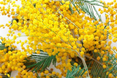 Come ogni anno, puntuale torna il giorno in giallo, l'8 marzo. Giorno della triste ricorrenza, quello in cui tante donne hanno messo in gioco la loro