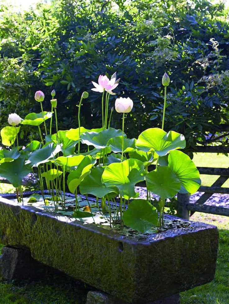 Photo of Create a mini water garden – design, flora and practical tips