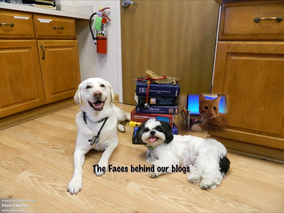 Visit Our Blogs For Valuable Pet Information And All Kinds Of