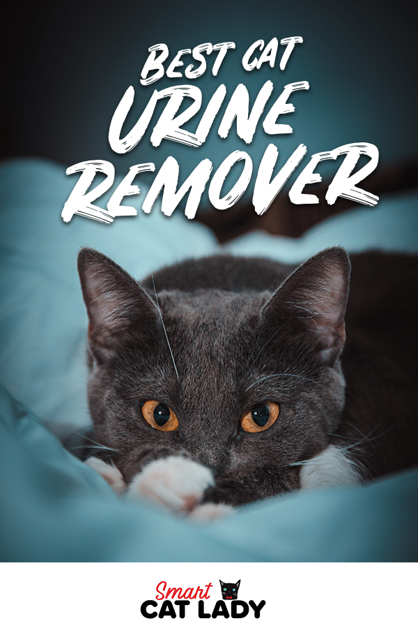 Best Cat Urine Remover from Furniture and Carpet Having difficulty cleaning dried urine from your carpet Check out this cat urine remover to help clean your furniture and...