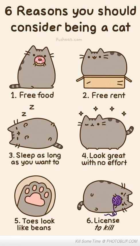 meow in my next life
