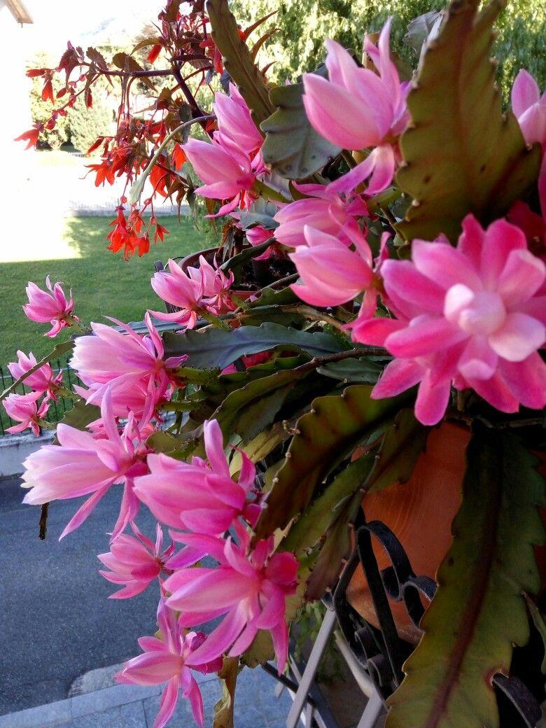 Fioritura di primavera