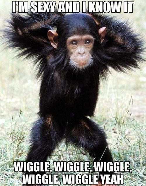 chimpanzee i'm sexy and i know it wiggle wiggle wiggle wiggl
