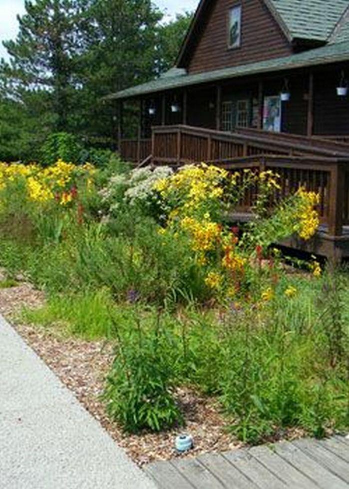 Rain Garden Design Landscaping Front Yards_23 Gallery
