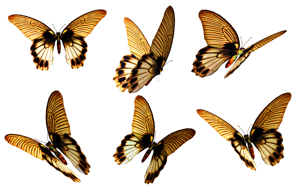 Butterflies 6 Png Stock By Roys Art On Deviantart Butterfly Pictures Butterfly Png