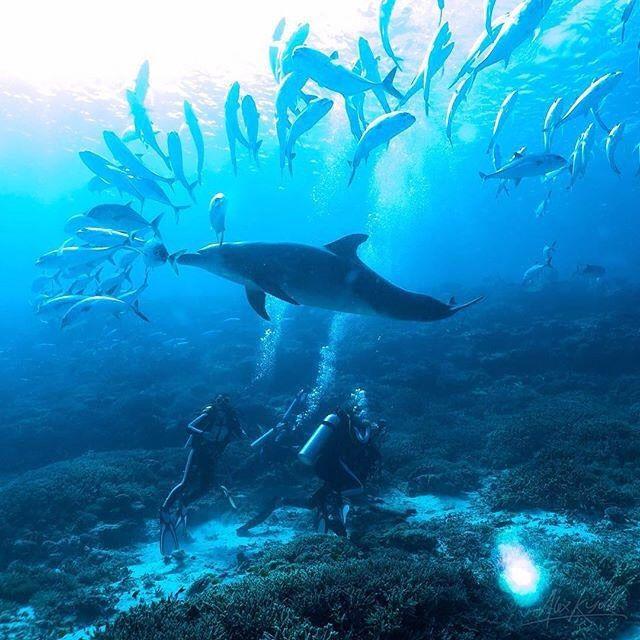 Amazing! Photo: @alex_kydd // #underwater #nature #reef #ladyelliotisland…