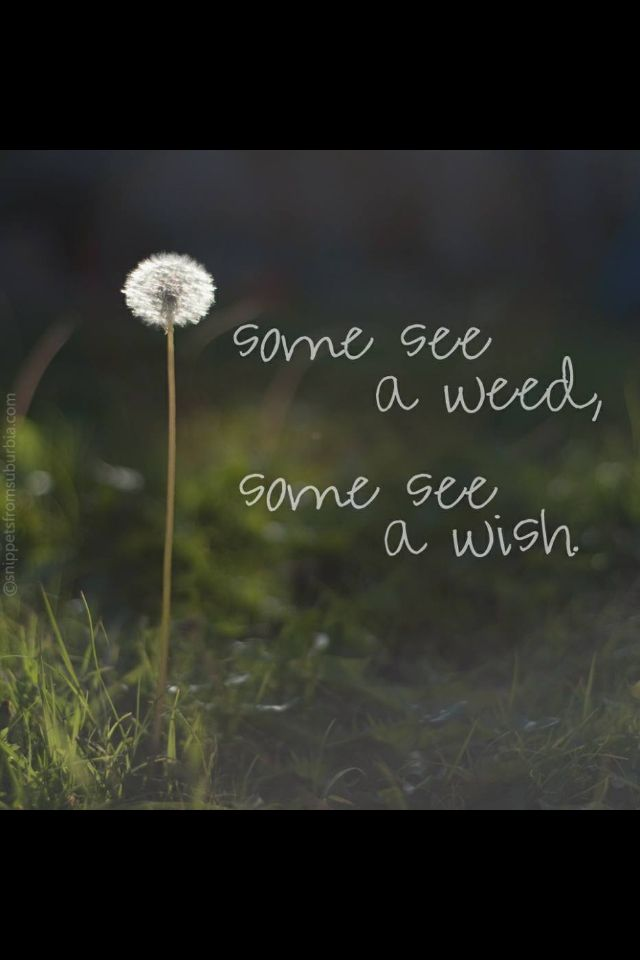 "Midnight Garden:  ""Some see a weed; some see a #wish."""