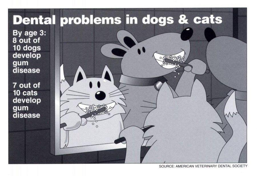Animal Medical Clinic of Chesapeake 23320 Dental