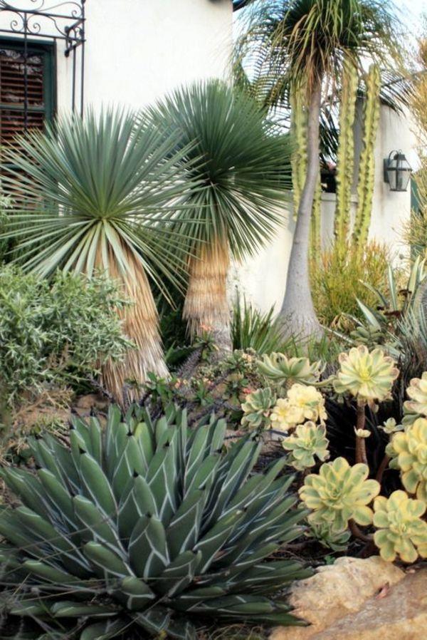 Palmlilie Eine Bezaubernde Zier Und Nutzpflanze Palmen Garten Wustenlandschaft Palmlilie