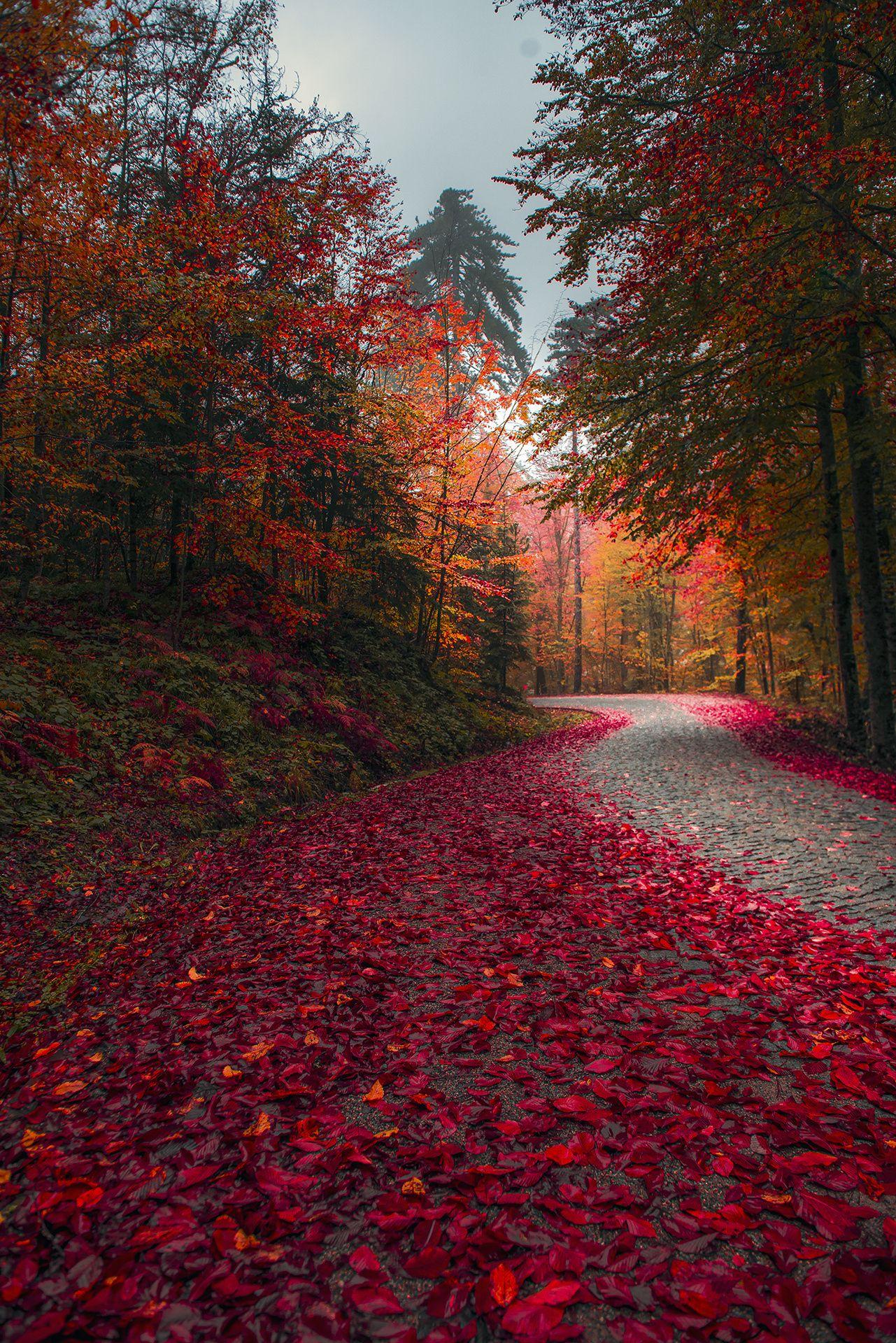 Red Autumn Road Landscape By Zeki Seferoglu Beautiful Nature Autumn Scenery Nature