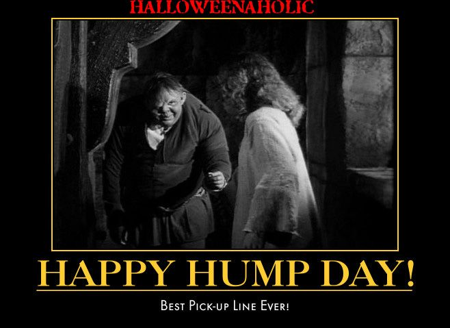Happy Hump Day | Wednesday: It's Hump Day! | Pinterest