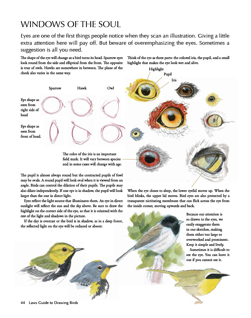 Laws Guide to Drawing Birds eyes | Птицы (творчество) | Pinterest ...