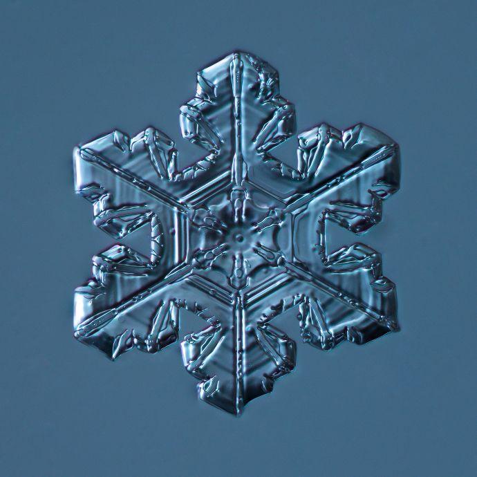 snowflake portrait by Douglas Levere