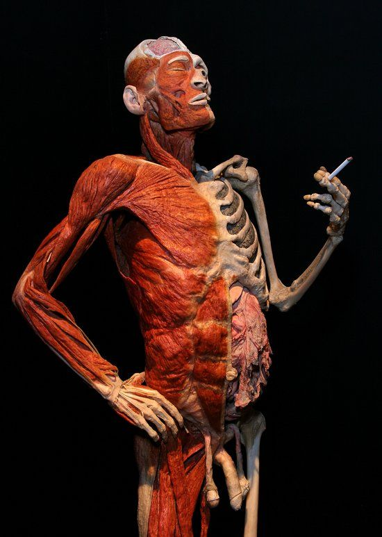 body worlds exhibit seoul by johanne miller-42 | human body- uhh, Muscles