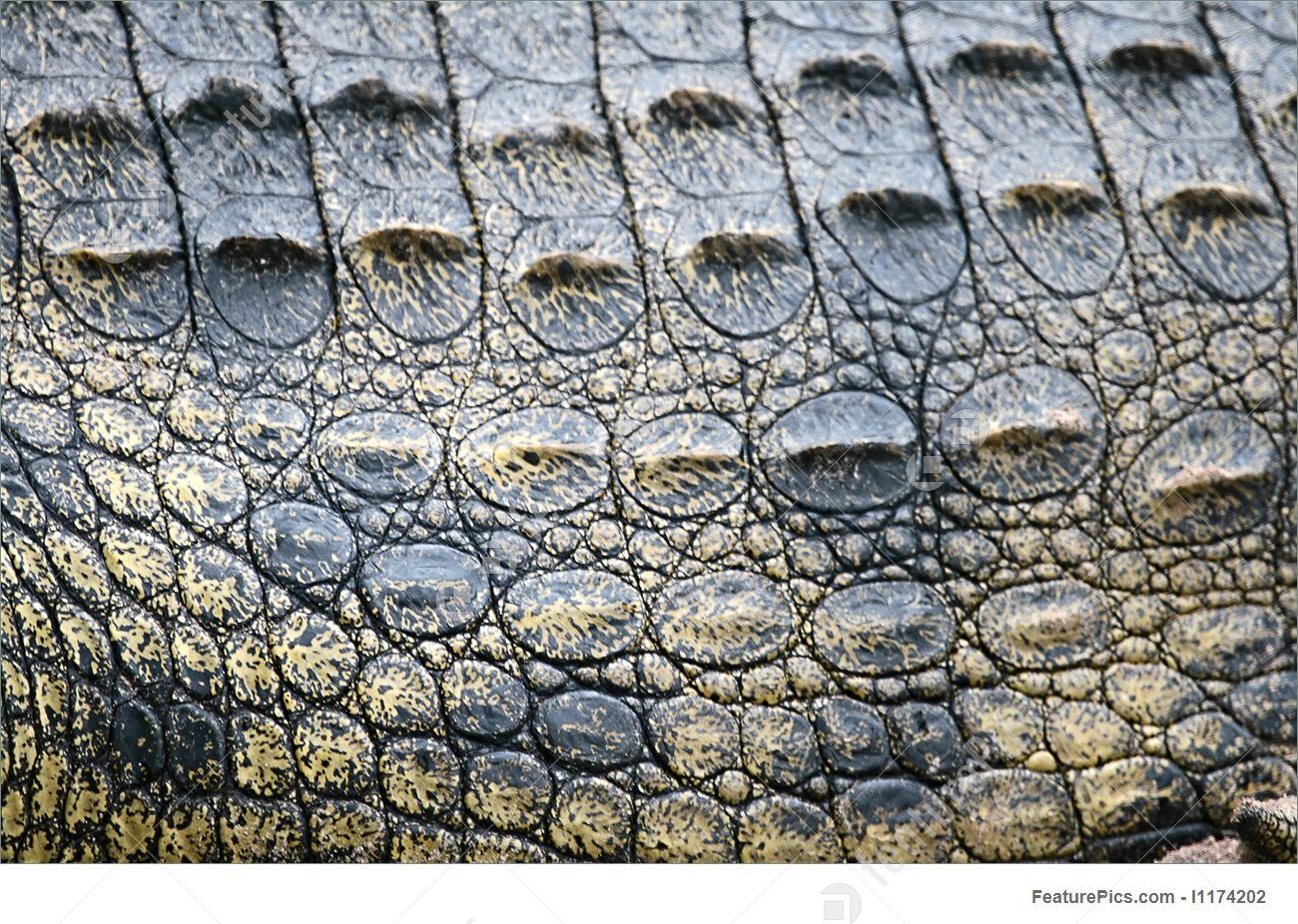 how to draw alligator scales