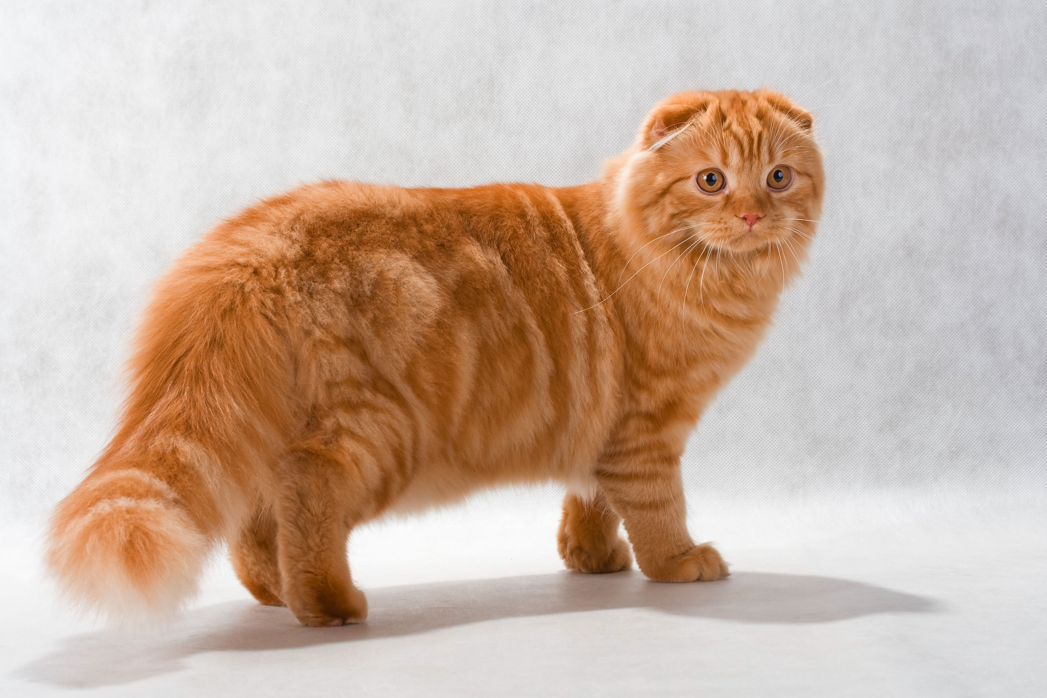 Up To 90 Of Cats Over The Age Of 12 Have Arthritis Meowch Discover The 6 Warning Signs To Watch Out For In Your Kitty And H Pet Plan Pets Cats And Kittens