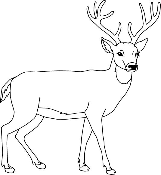 Coloriage, un cerf   Dory, coloriages | Cerf dessin, Coloriage