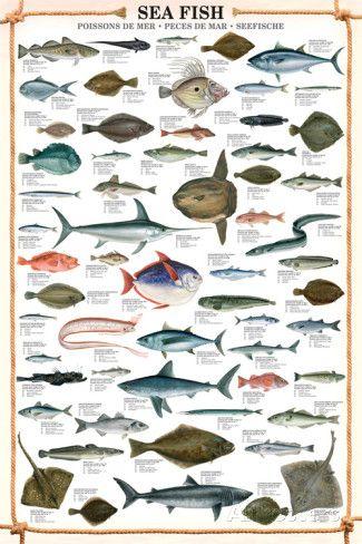 Sea Fish Educational Poster Posters Allposters Com Sea Fish Fish Chart Salt Water Fishing