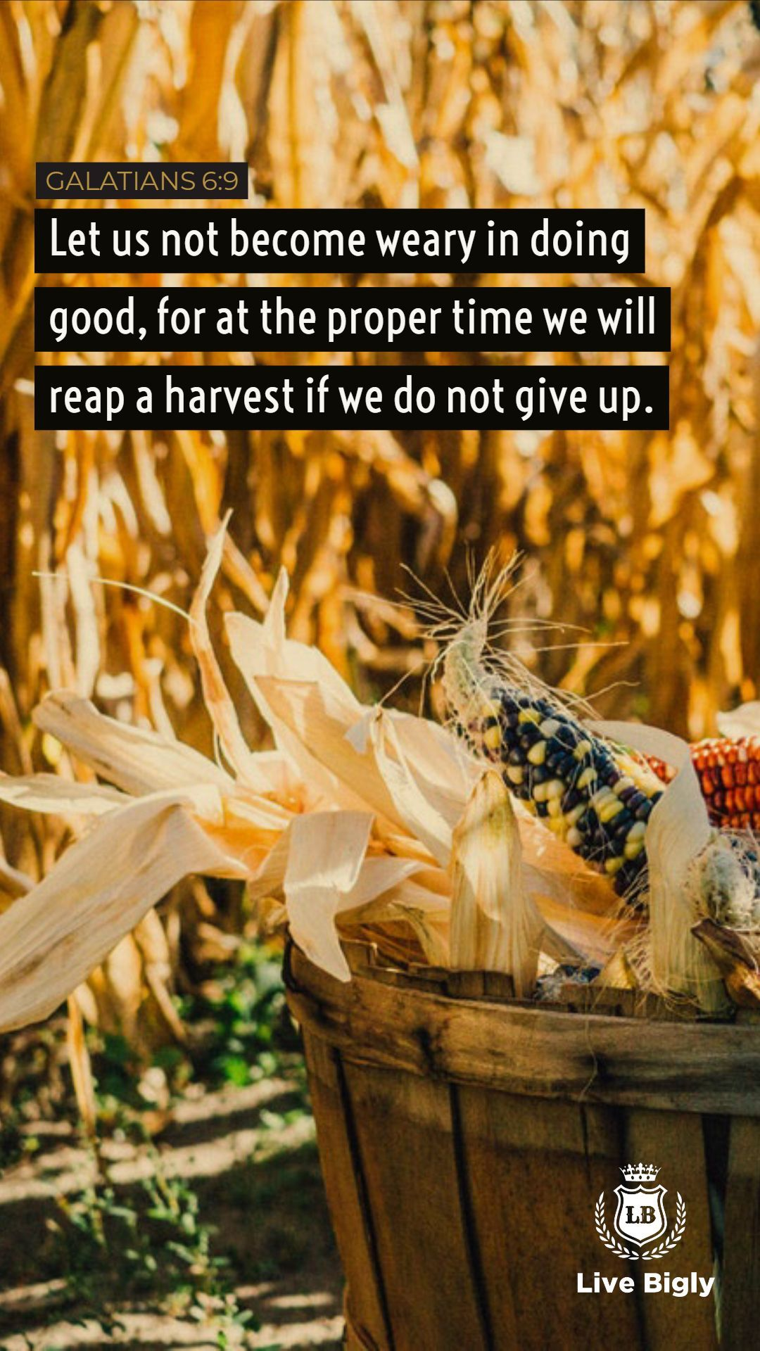 You Reap What You Sow Bible Livebigly Life Affiliate Quote