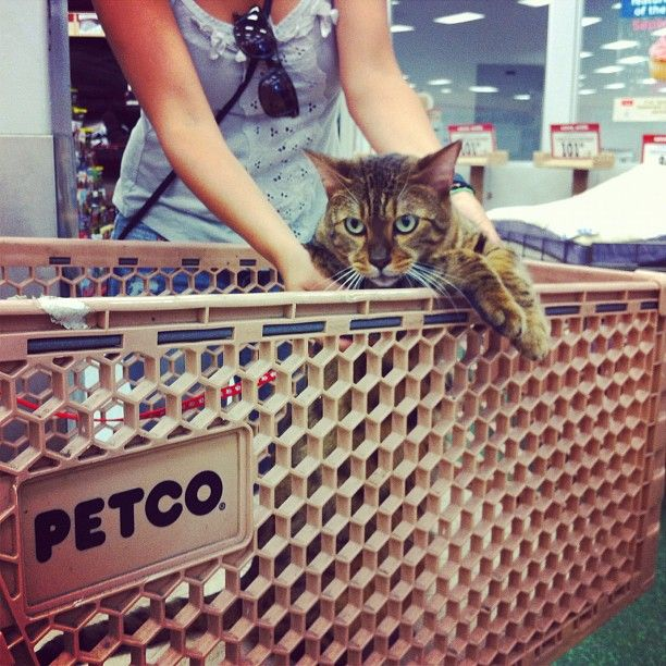 Did you know cats are at Petco too? Maybe we'll