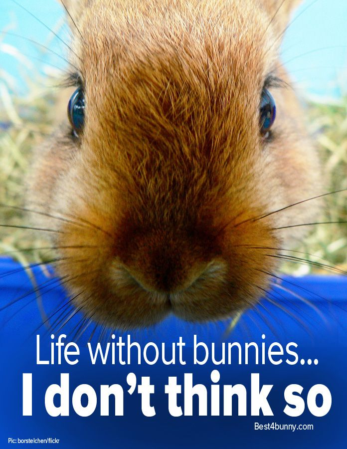 Life without bunnies... Couldn't imagine it for one second