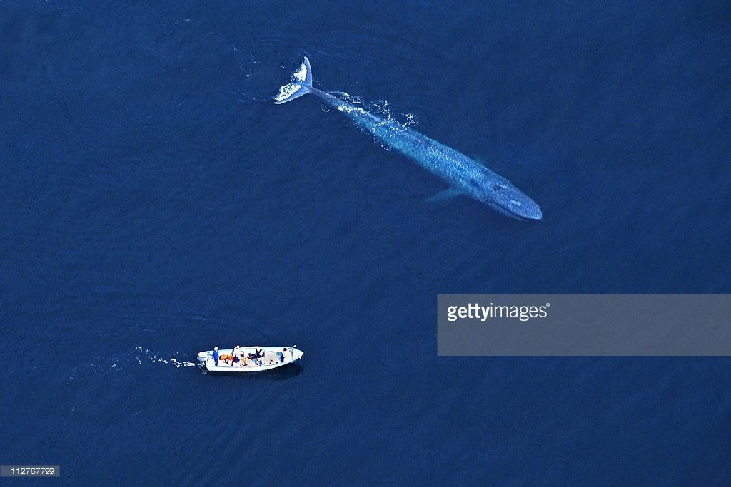 An Aerial View Of A Whale Getting Up Close To A Boat In The Sea Of