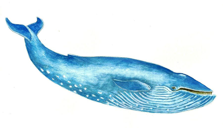 Blue Whale Painting  Blue Whale Fine Art Print  whales
